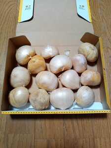 即購入OK 送料込 令和3年産 愛媛県産にんにく 「ジャンボ」極上大玉バラ 1kg 無農薬栽培