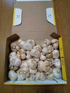 即購入OK 送料込 令和3年産 愛媛県産にんにく 「ジャンボ」小ぶり 1kg 無農薬栽培