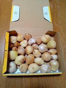 即購入OK 送料込 訳有品 1kg 令和3年産 愛媛県産にんにく 「ジャンボ」無農薬栽培