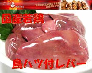 ★即決★焼鳥★国産若鶏レバー(ハート付き)1袋500g入り(冷凍)♪未調理♪消費税込み