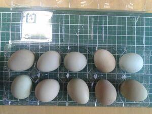 ヒメウズラ(白系)有精卵4個