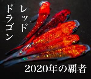 【2020年の覇者 レッドドラゴンめだか】有精卵15個+α (サファイア ブルージェイ モルフォ 夜桜 卑弥呼)