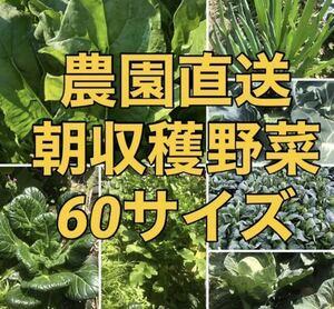 福岡県産★野菜詰め合わせ 60サイズ 栽培期間中農薬不使用または減農薬 朝摘み