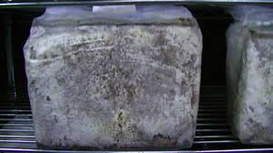 OVER80菌床ブロック12個 関西ファーム