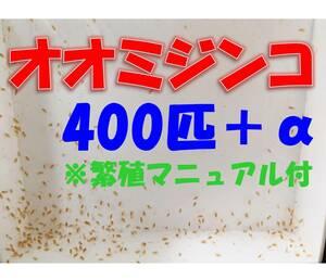 【オオミジンコ(ダフニアマグナ)400匹+α+繁殖マニュアル ※死着保証有 熱帯魚 金魚 メダカ の餌 稚魚育成に】