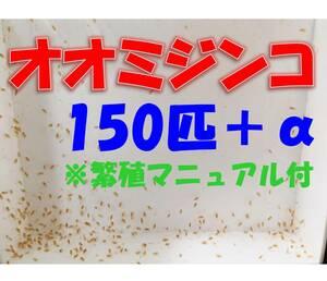 【☆匿名配送☆オオミジンコ(ダフニアマグナ)150匹+α+繁殖マニュアル ※死着保証有 熱帯魚 金魚 メダカ の餌 稚魚育成に】