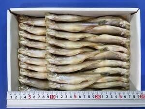 高級な味のししゃもです!■北海道産 本ししゃも メス 30尾/箱