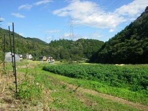 安心安全 農家直送 兵庫県猪名川町産 野菜詰め合わせ 農家直送だからできるこの価格と品質 お買い得