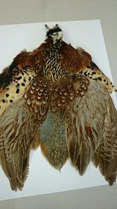 限定レア品!リングネックコックフェザントコンプリート/鳥の羽根 フェザー フライマテリアル フライフイッシング 毛鉤 テンカラ