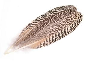 高品質!ピーコッククイル1ペア(2本入り)Lサイズ【ナチュラル】 フライマテリアル・フェザー・鳥の羽根・毛鉤・タイイング 装飾用にも!