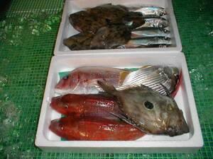 【送料込み】 鮮魚お試しセット 3~4k 【激安】