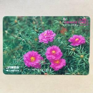 【使用済】 オレンジカード JR東日本 マツバボタン