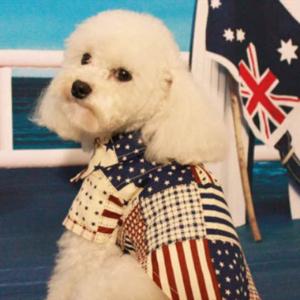 犬 猫 ペット服 シャツ L トップス アメリカ柄 星 新品 襟
