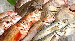 7【水深日本一】 駿河湾の恵み お任せ鮮魚セット8,000円分 魚種は8種類以上! お歳暮 お年賀 高級 ギフト 贈り物 景品 内祝 手土産 賞品
