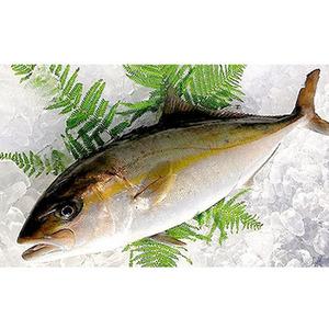 鮮魚 国産カンパチ(3~3.5kg) ★築地