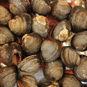 活赤貝 殻付き 500g (約2-5個) アカガイ