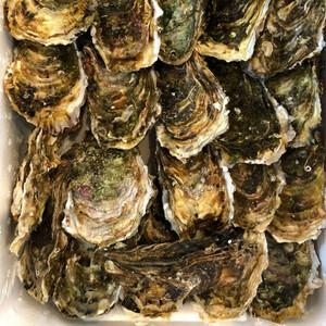 カキ 殻付かき 30粒 兵庫・三陸産 牡蠣