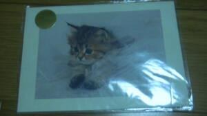 未使用・かわいい 子猫 ポストカード