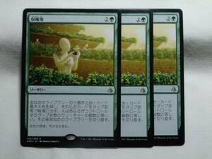 R緑 収穫期 日本語3枚まで