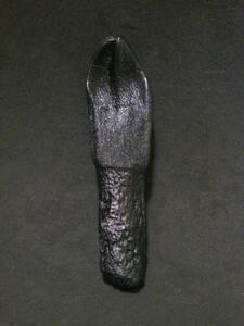 окаменелость зуба динозавр водяного дракона (копирует образцы) сундук