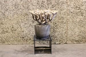 黒染仕上げ 6ミリスチール製 観賞台 塊根植物 観葉植物 盆栽 サボテン ユーフォルビア アガベ パキポディウム フェロカクタス
