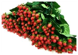 花のクローバー》生花 ヒペリカム 1本 切花 数量変更できます 生花 同梱 可能