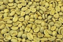 【1㎏】コーヒー生豆 グァテマラ ハニー 生豆 プレミアムコーヒー 自家焙煎 カフェ 送料無料