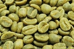 【1㎏】コーヒー生豆 コロンビア サンアグスティン 生豆 プレミアム 自家焙煎 こだわりコーヒー カフェ アロマ 送料無料