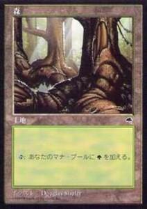 020334-008 TE/TMP 基本土地 森/Forest(4) 日1枚