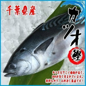 カツオ 1尾(約3kg)千葉県産