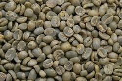 【1㎏】コーヒー生豆 グァテマラ アンティグア ラ・アゾテア農園 SHB 生豆 プレミアムコーヒー 自家焙煎 カフェ 送料無料