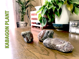 鑑賞石 水石 盆石 オブジェ ハンドメイド素材など 鉄石英 チャート 赤玉石 0920c