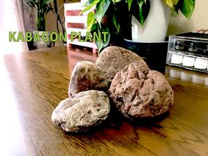 鑑賞石 水石 盆石 オブジェ ハンドメイド素材など 鉄石英 チャート 赤玉石 0920a