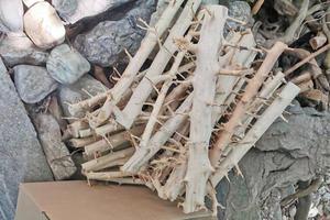 Mサイズ 木立 5本 枝流木 ネイチャーアクアリウム パルダリウム ブランチ 活着