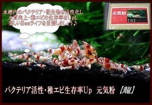 ◆送料無料♪【龍】 ビーシュリンプがぐ~んと元気に! 元気粉♪