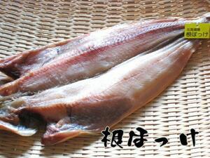 北海道産 根ホッケ一夜干 品質保証タグ付き・根ほっけ 函館