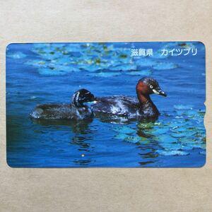 【使用済】 ふみカード 日本全国の県鳥 滋賀県 カイツブリ