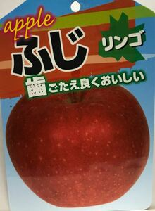 ふじ リンゴ 苗木