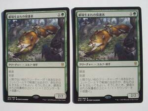バイン MTG 僻境生まれの保護者/Wildborn Preserver 日本語3枚