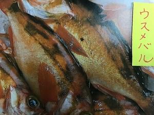 (魚)赤メバル23センチ2匹