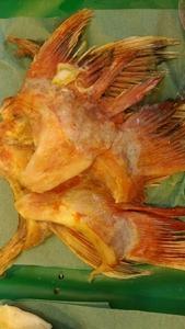 (魚)キンキンかま大2ヶ