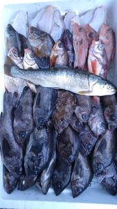 (魚)混み魚鮮魚3.5k送料込み4980円セット