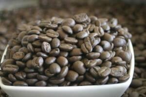 焙煎したての 珈琲豆 キリマンジャロ 500g コーヒー豆