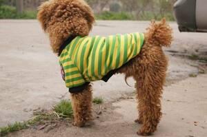 犬服 ボーダー柄Tシャツ ペット服 着ぐるみ 小型犬 グリーン