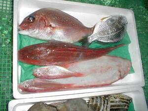 【送料込み】【激安】 鮮魚お刺身セット 大盛り 4~5k