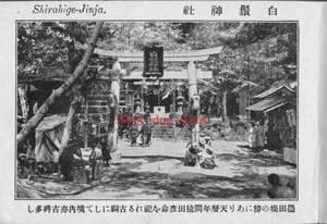 複製復刻 絵葉書/古写真 東京 東向島 白髭神社 明治期