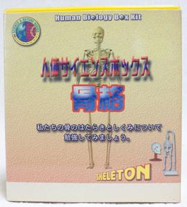 人体サイエンスボックス 骨格 ボックスキット / 理科 ガイコツ
