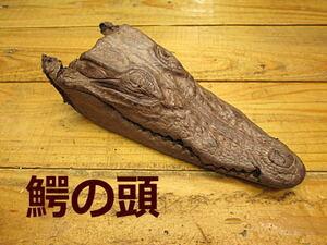 G-506【珍品6800円~】鰐の頭(茶)頭蓋骨*材料*天然*剥製