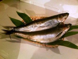 栄養価も高く超旨!脂のりのり 『甘塩 大鰊(にしん) 3尾セット 』 にしんって美味しいお魚なんですよ!(税込)